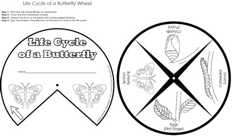 butterfly life cycle coloring pages az coloring pages