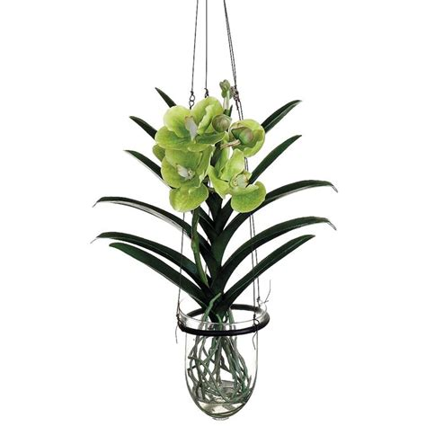 orchidea vanda in vaso di vetro vanda orchidee orchidea vanda