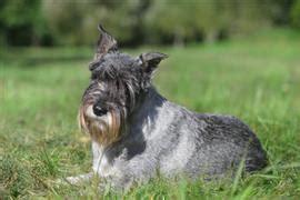 grey puppy names grey names at dognamed