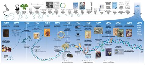 The Genome human genome project david streams