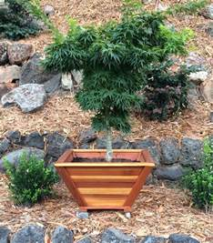 the bonsai planters built to last decades forever redwood choosing a bonsai pot for your tree bonsai empire