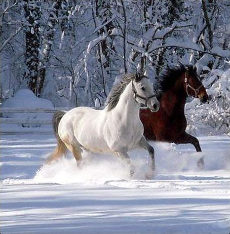 Jumping Animal By Acc crime park horses get a run in the snow cc
