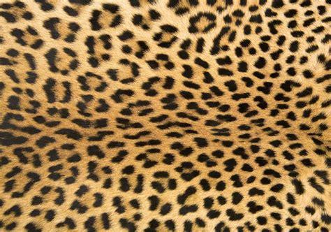35 animal print room exles cheetah leopard zebra animal print rugs safari animal tiger skin printed area