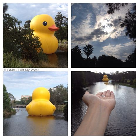 rubber sts sydney sydney festival rubber duck at parramatta park sydney