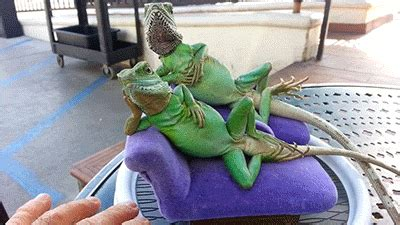 the royal family david icke and the reptiles merovee andrew neil totally professional asking icke if royals are