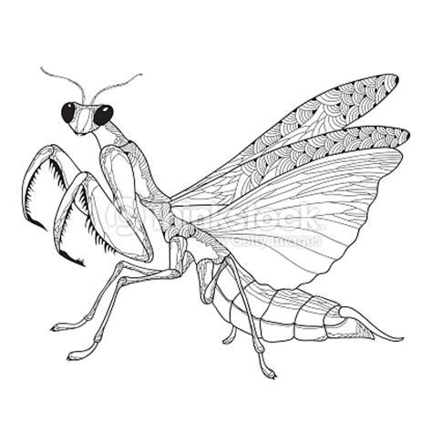 mantide religiosa porta fortuna mantis religiosa mantis religiosa o aislado sobre el fondo