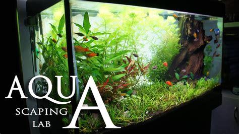 Tutorial Aquascape by Aquascaping Lab Tutorial Rich Mix Tank Wood