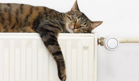 radiator tips to keep your home warm and toasty