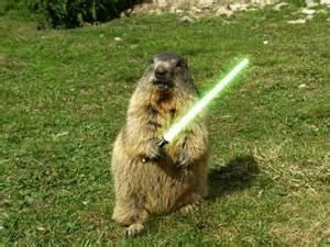 groundhog day sequel groundhogs my forum