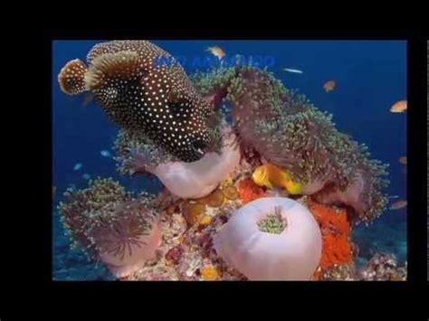 imagenes de la vida bajo el mar vida bajo el mar life under the sea 海下的生活 youtube