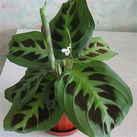 tropical foliage house plants 105 best images about tropical house plants on