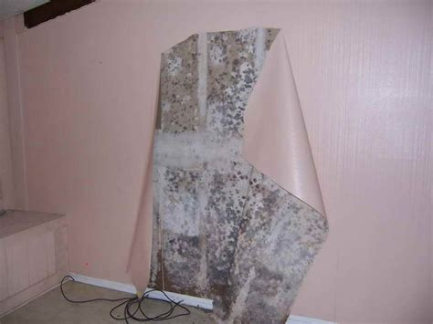 pink mold bathroom 18 best images about black mold the effective way on