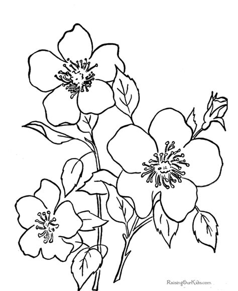 coloring pages of flowers that you can print great free images to use as digi sts and colour in