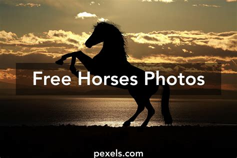 Free Stock Photos Of Horses 183 Pexels Images Free