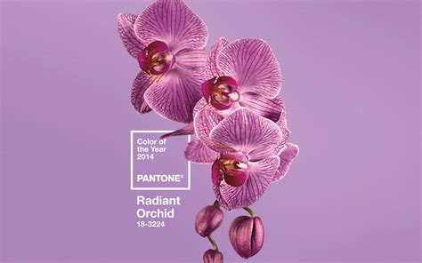 color of the year 2013 pantone s colour of the year