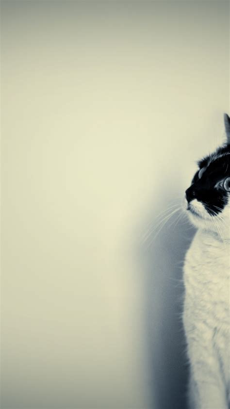 wallpaper cute black and white 768x1366 cute black and white cat surface rt wallpaper