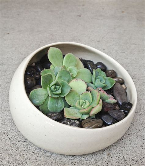 mini succulent planters planter terrarium mini succulent gift garden home decor
