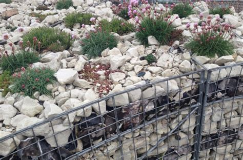 planting in walls alitura