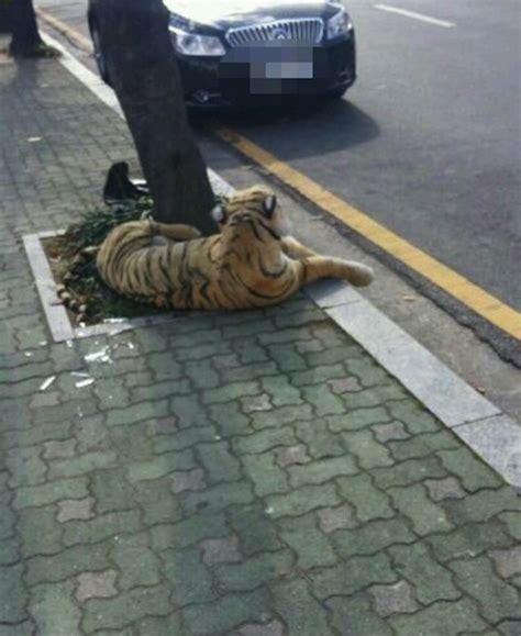 Exported Boneka Kucing Anggora Real boneka macan ini hebohkan warga korea merdeka