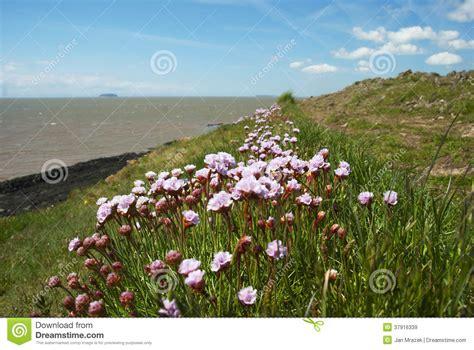 i fiori mare i fiori si avvicinano al mare immagini stock libere da
