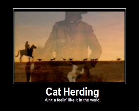 Herding Cats Meme - georgette s jiu jitsu world gracie bullyproof teaches