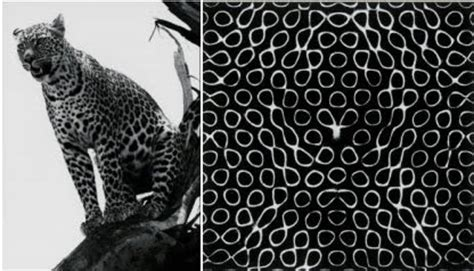an observed pattern in nature is called doc madhattan turing patterns in coats and sounds