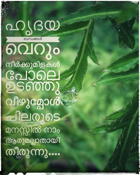 meaning of biography in malayalam malayalam quote ashiqueshamnad photography pinterest