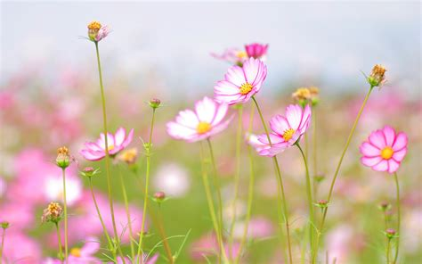 summer flowers wallpaper 23547 open walls blume full hd wallpaper and hintergrund 2560x1600 id