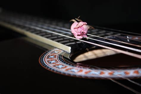 rose theme guitar black guitar and rose by matricaria72 on deviantart