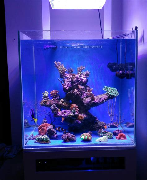 nano reef light fixtures nano reef lighting lilianduval