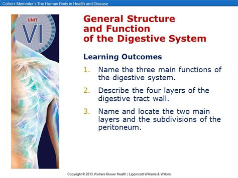 purpose and generic structure of biography chapter 19 the digestive system ppt video online download
