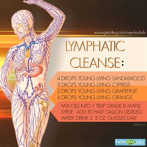 Lymph Detox Essential by Lymphatic Cleanse New Leaf Oils Erin King Poirier