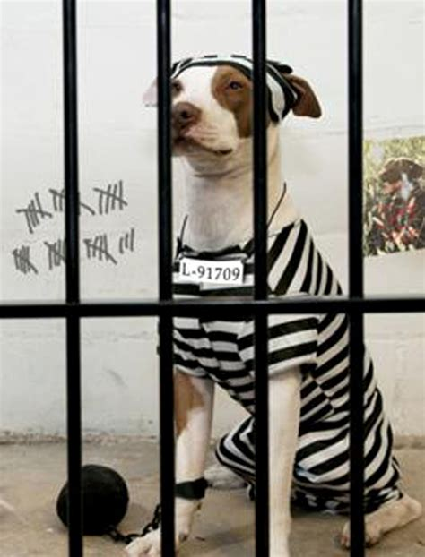 prison dogs meme template search imgflip