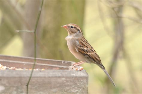 pictures of birds in alabama alabama winter skies filled with migrating birds gulfcoastnewstoday