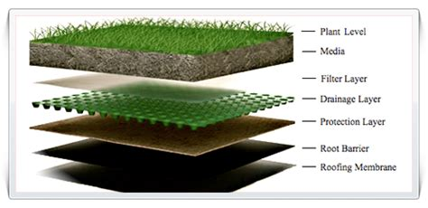 Introduction to Green Roofing