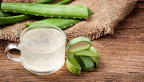 Stick Aloevera Lidah Buaya best aloe vera gels alternatives reviewed in 2018