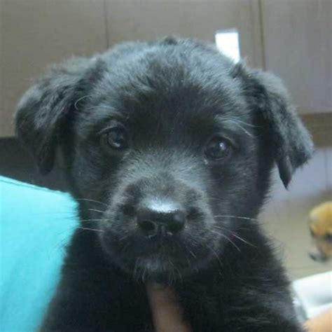 puppy stop and adopt pin by helen animal center on adopt a or puppy pintere