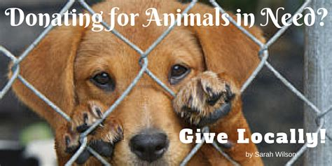 What Information Do You Need To Run A Background Check Donating For Animals In Need Give Locally