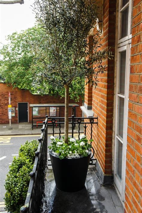 Tree Planters Uk by Outdoor Artificial Plants Roof Terrace Design Window