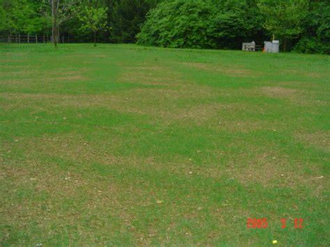 hydroseeding germination lawnsite