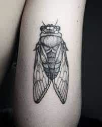 cicada tattoo meaning tattoos with meaning symbolism