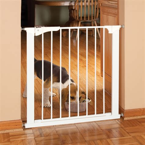 metal dog gates for the house gates for dogs in house 28 images carlson pet gates carlson flexi walk thru gate