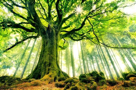 beautiful tree the 14 world s most beautiful trees mostbeautifulthings