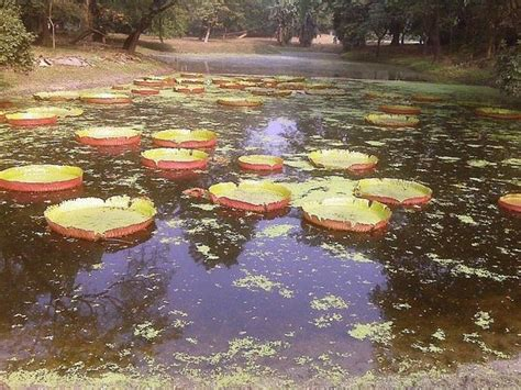 Indian Botanical Garden Indian Botanical Garden Howrah India Top Tips Before You Go Tripadvisor