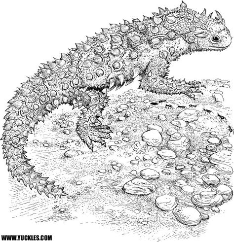 cute lizard coloring pages cute gila monster download coloring pages cute lizard