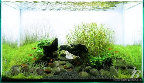 black on aquarium plants list of aquarium plants 2017