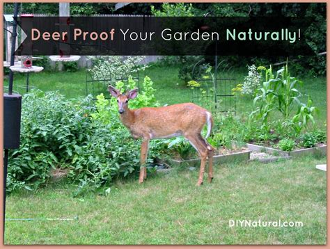 Deer Proof Your Garden And Yard Naturally How To Keep Deer Out Of Vegetable Garden