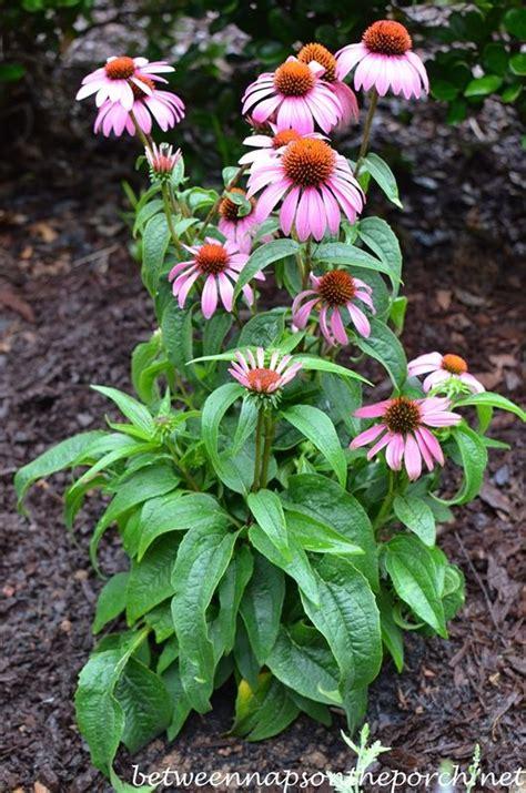 create a small sun loving perennial garden gardens sun and perennials