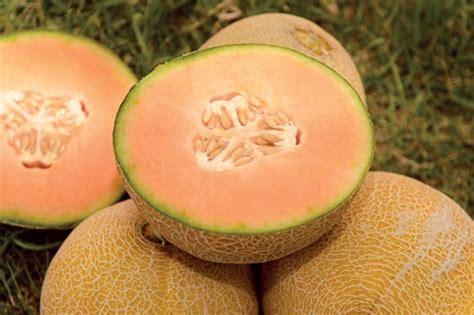 Cantaloupe Shelf by New Melon Is Sweet Like Justin Timberlake Israel21c