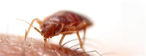 stechende insekten wadenstecher stechende fliege